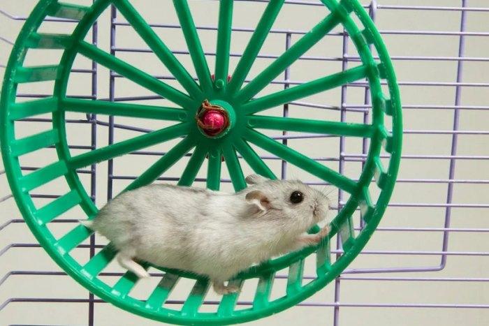 колесо для хомяков в клетку