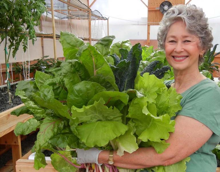 Phyllis-harvesting-greens