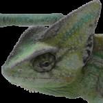 Рисунок профиля (Boyarin)